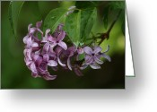 Seasons Pyrography Greeting Cards - Scent Of Lilac Greeting Card by Valia Bradshaw