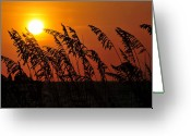Sea Oats Greeting Cards - Sea Oats at Sunset Greeting Card by David Lee Thompson