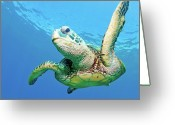Pacific Islands Greeting Cards - Sea Turtle Greeting Card by Monica and Michael Sweet
