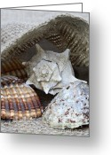 Still Life Greeting Cards - Seashells Greeting Card by Frank Tschakert