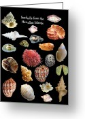 Seashell Art Greeting Cards - Seashells from the Hawaiian Islands Greeting Card by Daniel Goodwin