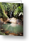 St. Lucia Photographs Greeting Cards - Secluded Waterfall Greeting Card by Bill Mortley
