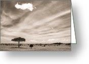 Duotone Greeting Cards - Serengeti Skies Greeting Card by TB Sojka