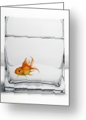 Goldfish Greeting Cards - Shiny Greeting Card by Christina Meeusen
