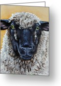 Sheep Greeting Cards - Shirley Greeting Card by Laura Carey