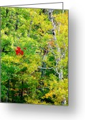 Red Leaves Greeting Cards - Singleton Greeting Card by Emily Stauring