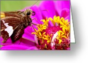 Pollinate Greeting Cards - Skipper on Zinnia  Greeting Card by Thomas R Fletcher