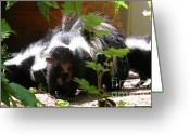 Colorado Creatures Greeting Cards - Skunk Family Greeting Card by Crystal Garner