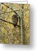 Minard Greeting Cards - Sleeping Owl Greeting Card by Vern Minard