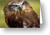 Owls Bird Of Prey Greeting Cards - Sleepyhead Greeting Card by Angel  Tarantella