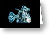 Saltwater Fish Greeting Cards - Smooth Trunk Fish Greeting Card by Mark Christian