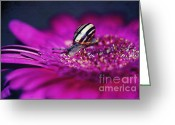 Daisies Photos Greeting Cards - Snail on flower Greeting Card by Kristin Kreet