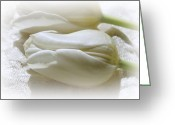 Beautiful Flowers Greeting Cards - Snow White Greeting Card by Kathy Bucari