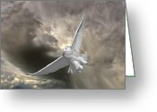 Animal Hunting Greeting Cards - Snowy Owl in Flight Greeting Card by Mark Duffy