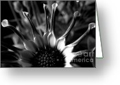 Contemporary Photography Greeting Cards - Solar Orgy Greeting Card by Louie Rochon