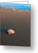 San Simeon Greeting Cards - Solitude Greeting Card by Jeffrey Campbell