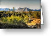 Saguaro Cactus Greeting Cards - Sonoran Desert Greeting Card by Saija  Lehtonen
