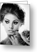 20th Century Photo Greeting Cards - Sophia Loren (1934-  ) Greeting Card by Granger
