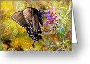 Spicebush Swallowtail Greeting Cards - Spicebush Butterfly Looking Pretty Greeting Card by J Larry Walker