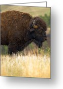 Huge Greeting Cards - Spirit of the Wild Greeting Card by Jeffrey Campbell