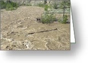 River Flooding Greeting Cards - Spring Flood, Nicola River, Canada Greeting Card by Kaj R. Svensson