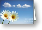 Heavens Greeting Cards - Spring Flowers Greeting Card by Carlos Caetano
