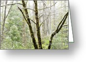 Williams Greeting Cards - Spring Snow along Williams River Scenic Byway Greeting Card by Thomas R Fletcher