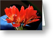Flower Blossom Greeting Cards - SpringLily2 Greeting Card by Robert Trauth