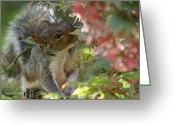Seasons Pyrography Greeting Cards - Squirrel In Fall Greeting Card by Valia Bradshaw