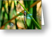 Transformative Art Greeting Cards - Stained Glass Dragonfly Greeting Card by Lisa Redfern