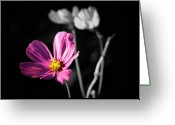 Selective Color Greeting Cards - Standing Out Greeting Card by Karen M Scovill