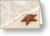 Marine Life Greeting Cards - Starfish and ocean wave Greeting Card by Elena Elisseeva