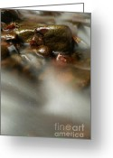 Screen Doors Greeting Cards - Stones in river Greeting Card by Odon Czintos