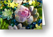Cactus Flower Digital Art Greeting Cards - Succulent Pond 1 Greeting Card by Amy Vangsgard