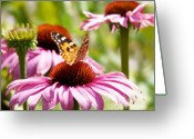 Echinacea Greeting Cards - Summertime  Greeting Card by Angela Doelling AD DESIGN Photo and PhotoArt