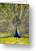 David Lade Greeting Cards - Sun King Greeting Card by David Lade