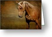 Pony Greeting Cards - Sundance Greeting Card by Lyndsey Warren
