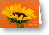 Orange Flower Photo Greeting Cards - Sunflower closeup Greeting Card by Elena Elisseeva