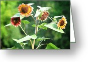 Bill Cannon Photography Greeting Cards - Sunflower Power Greeting Card by Bill Cannon