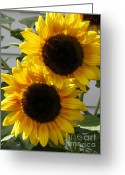 Fashion Photo Prints Greeting Cards - Sunflowers from the Color Fashion Mix Greeting Card by J McCombie