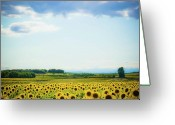 France Greeting Cards - Sunflowers Greeting Card by Kirstin Mckee