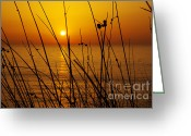 Warmth Greeting Cards - Sunset Greeting Card by Carlos Caetano