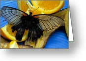 Swallow Tail Butterfly Greeting Cards - Swallowtail Greeting Card by Cheryl Cencich