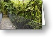 Rain Forest Greeting Cards - Swingbridge Greeting Card by Les Cunliffe
