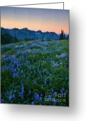 Aster  Photo Greeting Cards - Tatoosh Sunrise Greeting Card by Mike  Dawson