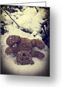 Teddy Bear Greeting Cards - Teddy In Snow Greeting Card by Joana Kruse