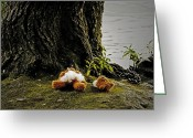 Teddy Bear Greeting Cards - Teddy Without Head Greeting Card by Joana Kruse