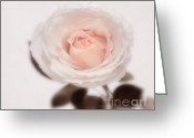 Roses Greeting Cards - Tender Greeting Card by Kristin Kreet