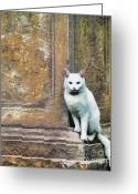 Gold Lame Painting Greeting Cards - The cat Greeting Card by Odon Czintos