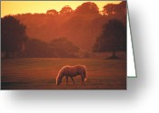 Gloaming Greeting Cards - The Irish Horse Greeting Card by Carl Purcell